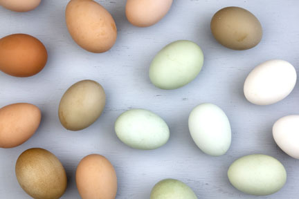 organic cage free eggs from Thera Farms